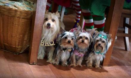 Puppy Star Christmas (2018)